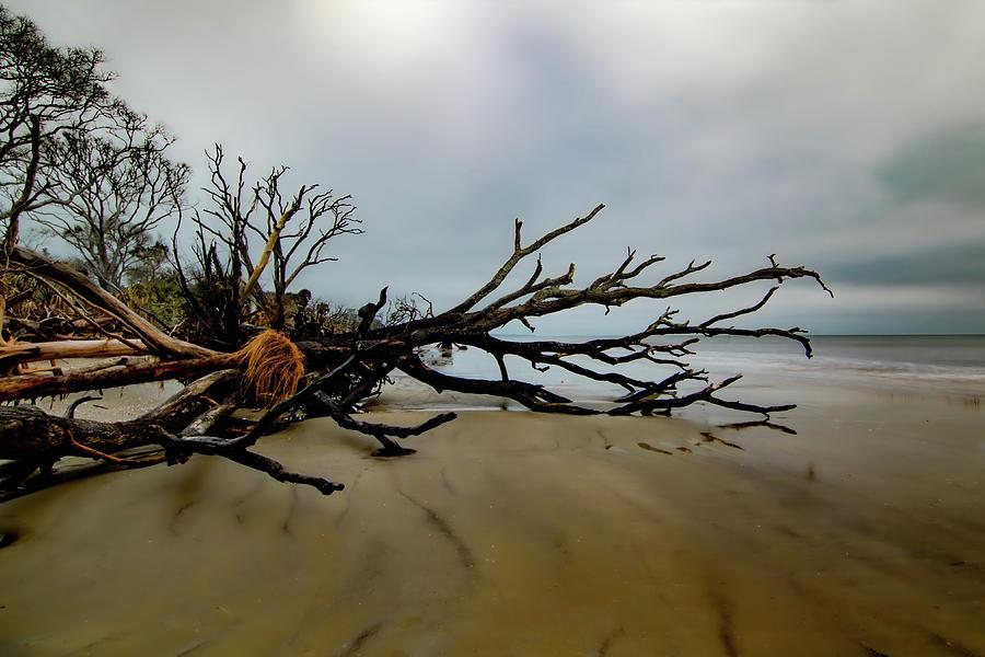 Botany Bay Driftwood Photograph
