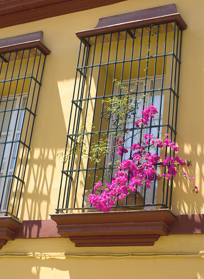 Bougainvillea on colourful terrace Photograph by Lyn Holly Coorg