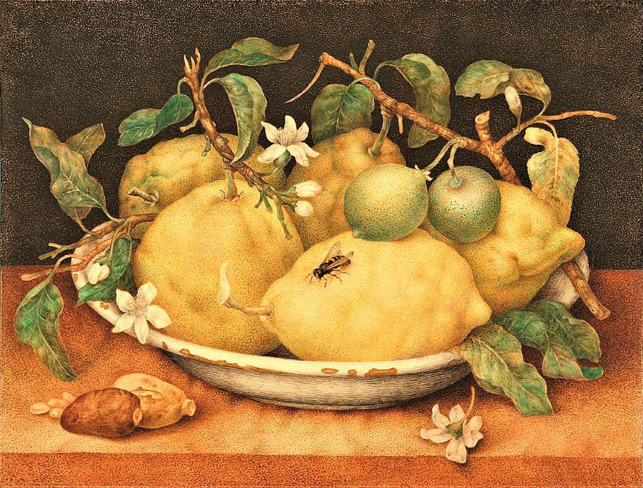 Bowl Of Citrons  Still Life Painting