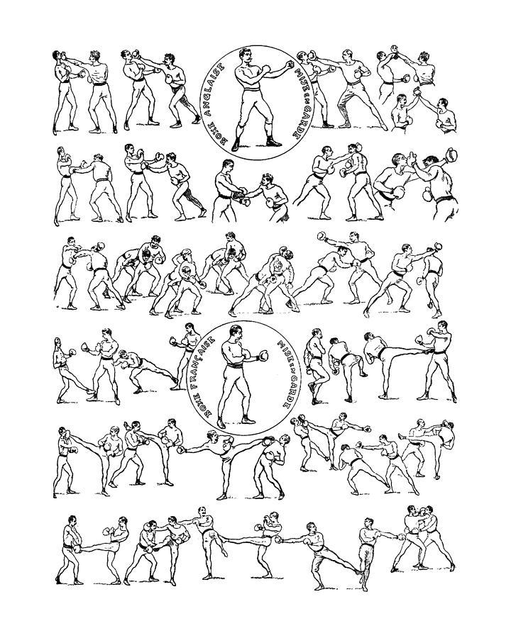 Boxing Drawing - Boxing champion by Madame Memento