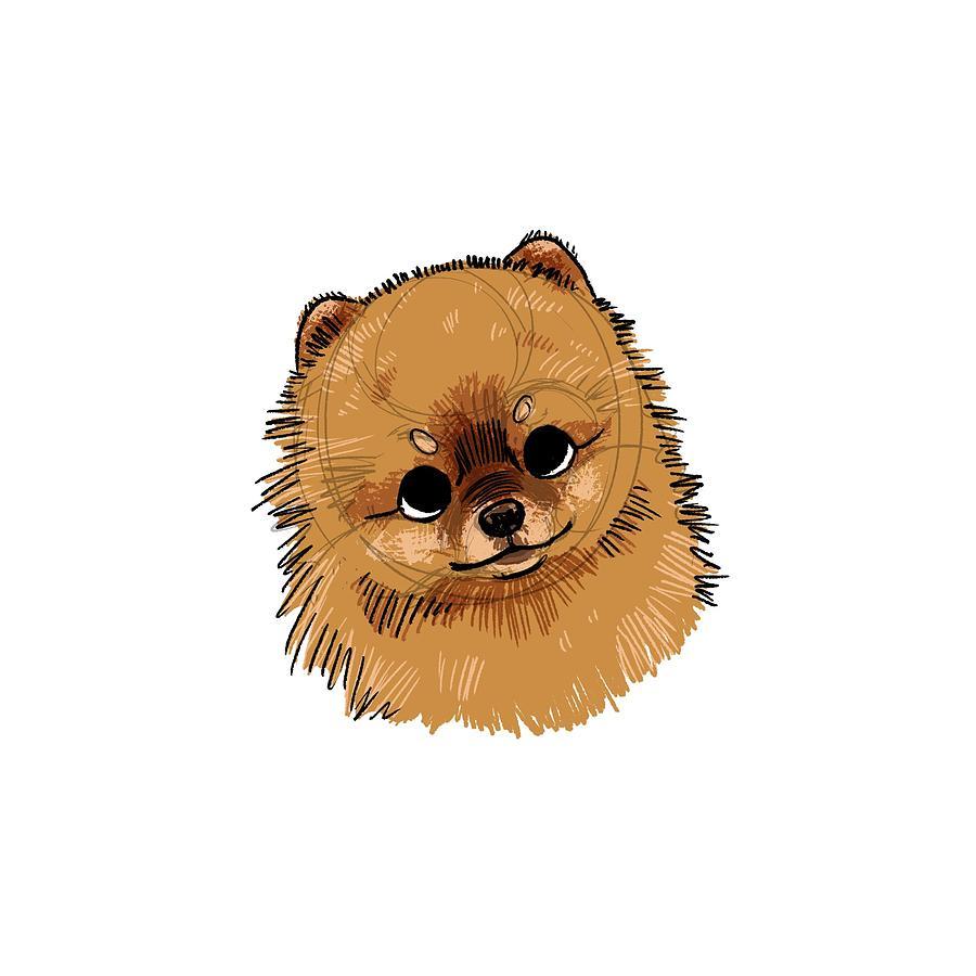 Pomeranian Drawing - Brackett - Dollie the Pomeranian by Claire DeWilde