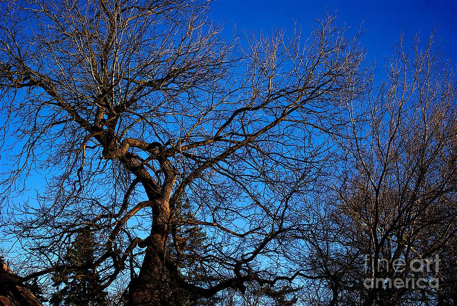 Branch Formations Morning Blue Sky by Frank J Casella
