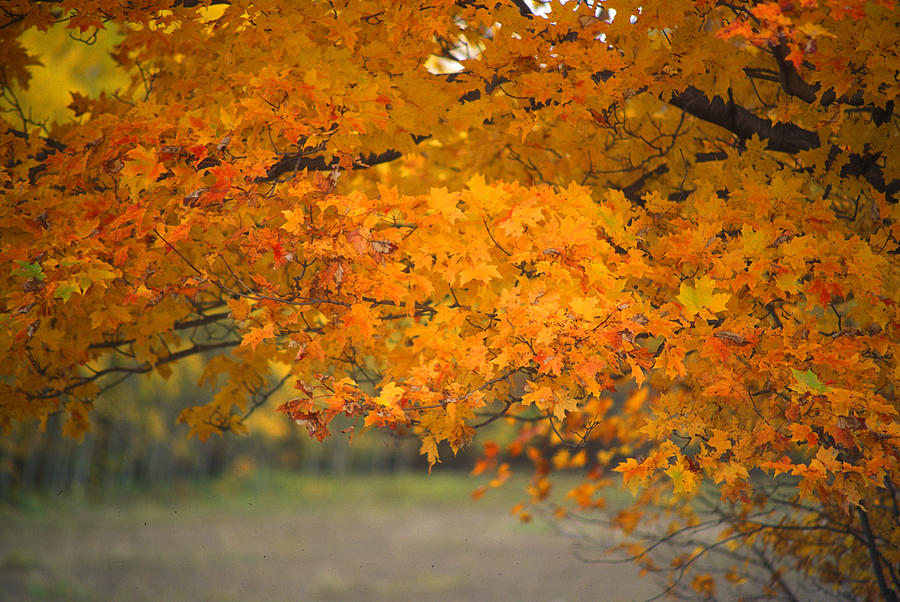 Branches With Autumn Foliage Photograph by Frank Schiefelbein / EyeEm