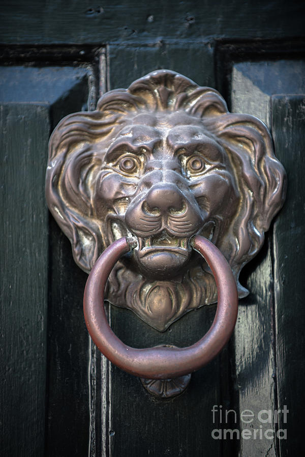 Brass Lion - Door Knocker Photograph