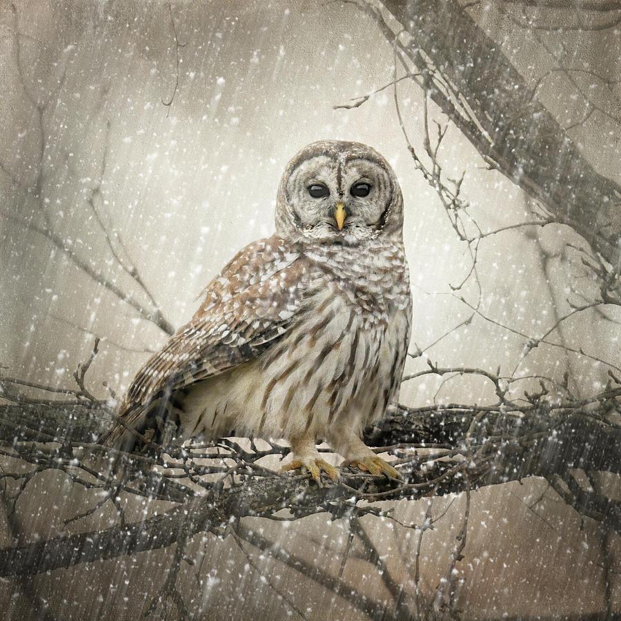 Brave The Storm by Jai Johnson