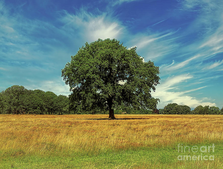 Tree Photograph - Breathing Space by Leigh Kemp