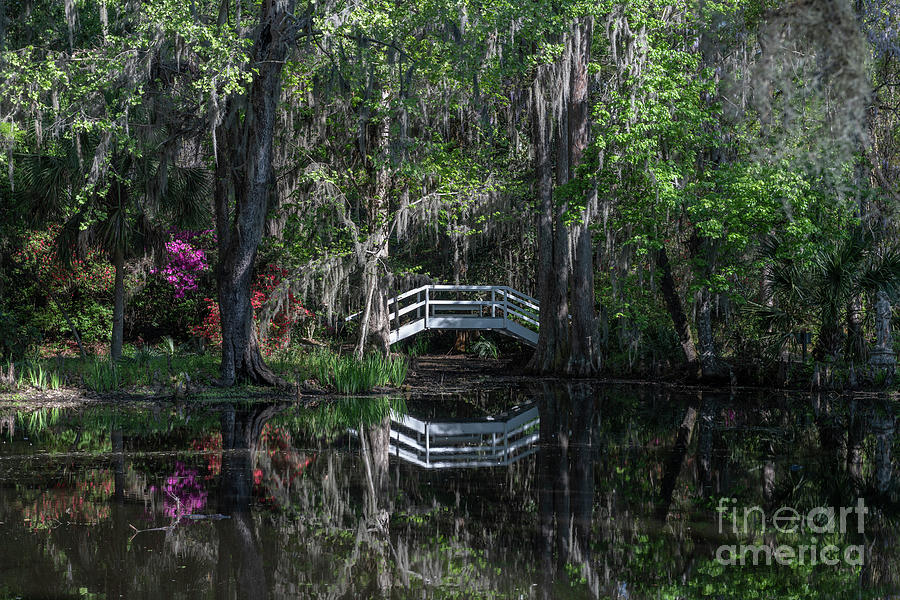 Bridges To Nook - Magnolia Plantation Photograph