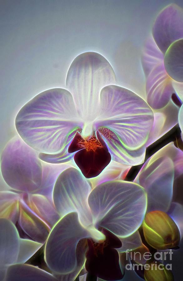 Bright Fiber Orchid by Patti Whitten