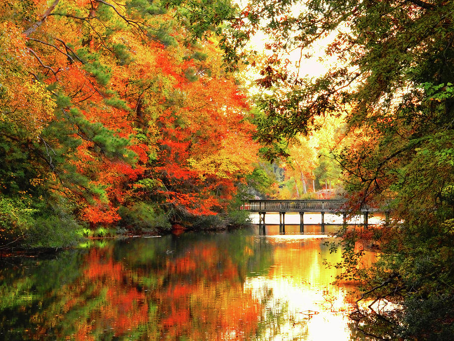 Brilliant Autumn in Mariners Museum and Park  by Ola Allen