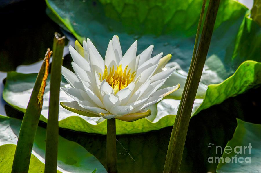 Brilliant Bloom Photograph
