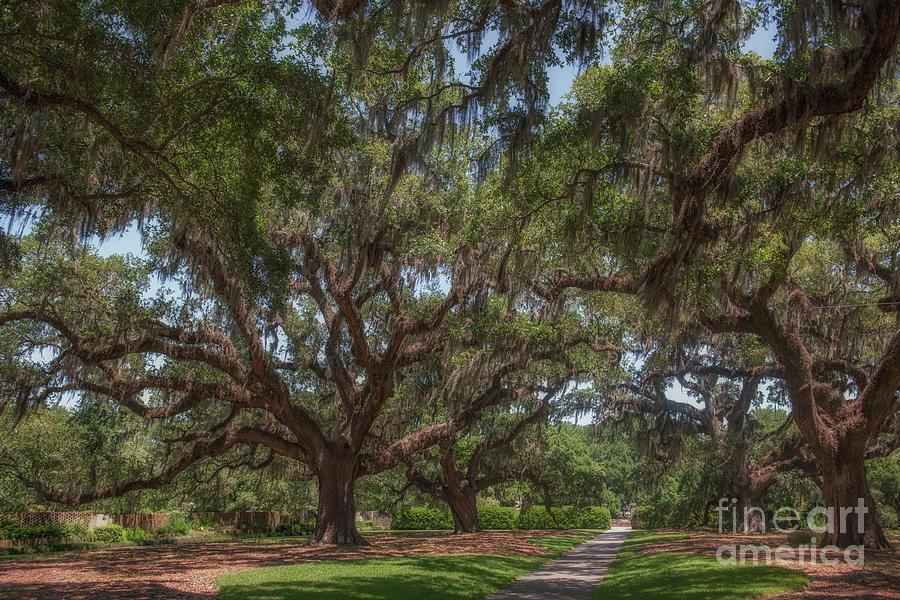 Brook Green Garden Path - Treasured Oaks Photograph