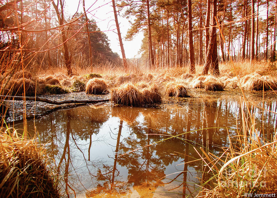 Forest Photograph - Brown Forest Pool by Richard Jemmett