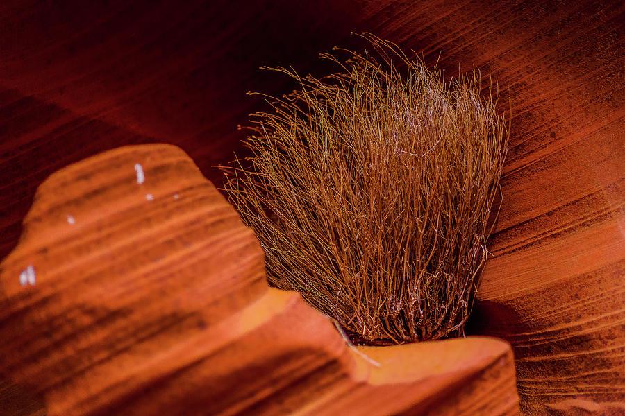 Brush In Arizona Red Rock Photograph