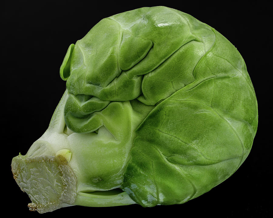 Brussels Sprout Photograph