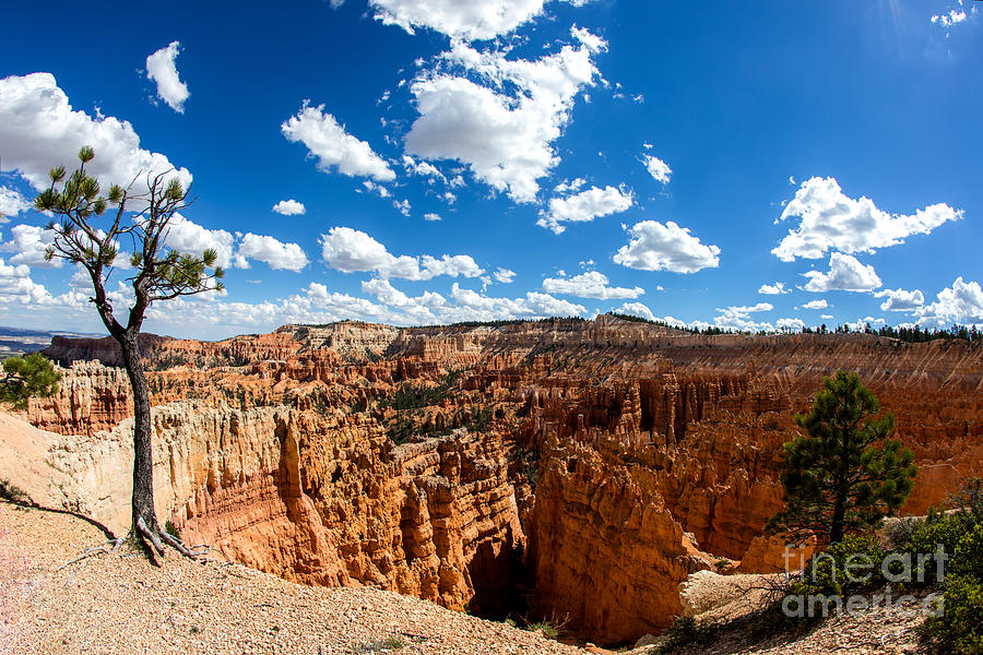 Bryce Canyon View Photograph