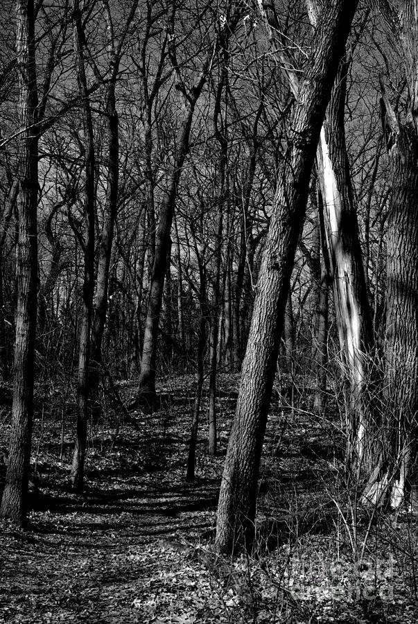 Budding Trees In The Woods - Black And White Photograph