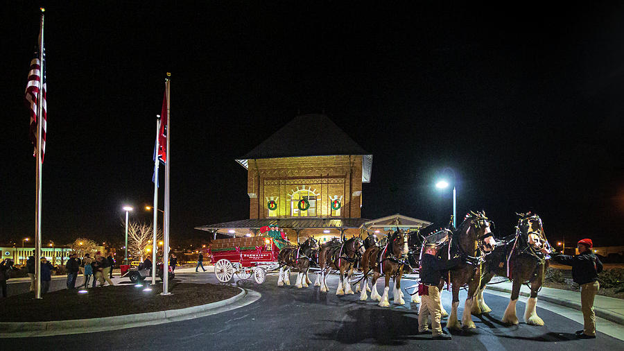 Budweiser Clydesdales at the Bristol Train Station by Greg Booher