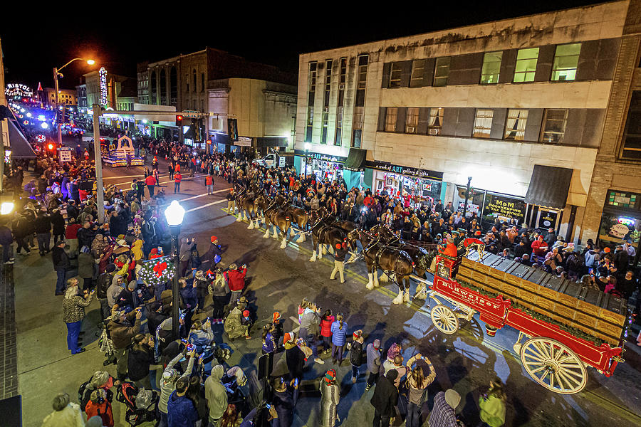 2019 Photograph - Budweiser Clydesdales in the Bristol Christmas Parade by Greg Booher