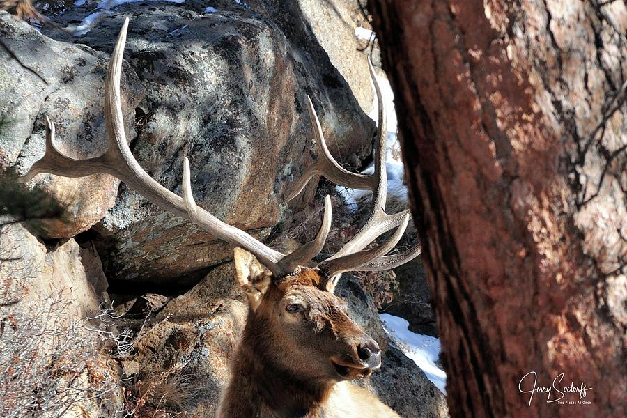 Bull Elk Antlers DS by Jerry Sodorff