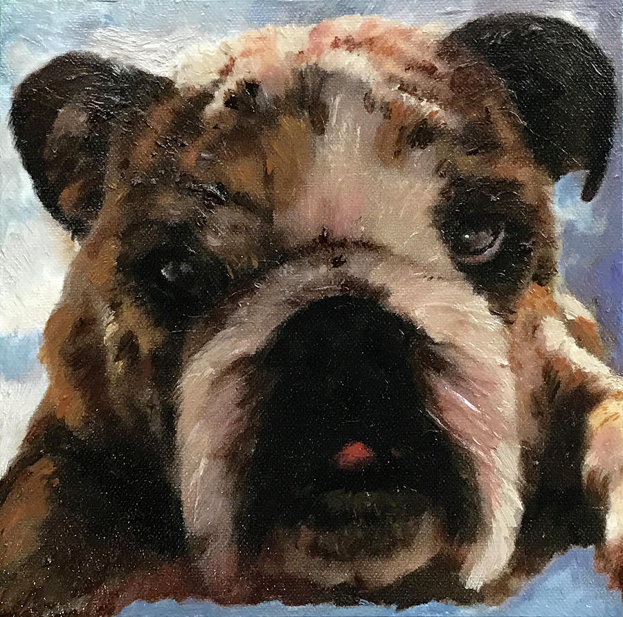 Bulldog Portrait by Portraits By NC