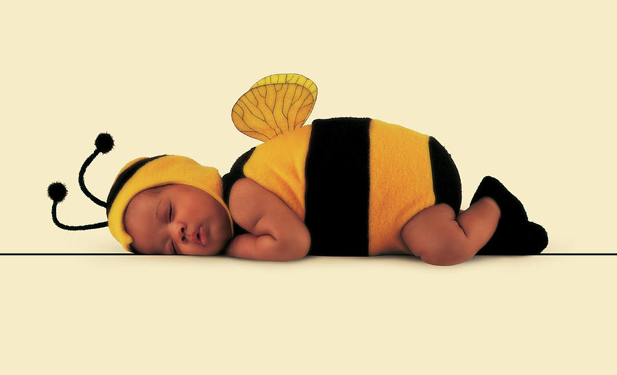 Bee Photograph - Bumblebee #4 by Anne Geddes