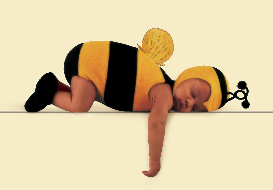 Bee Photograph - Bumblebee #5 by Anne Geddes