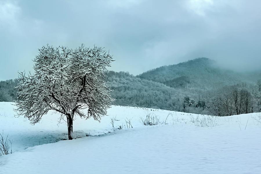 BUMGARNER'S TREE by Jennifer Robin