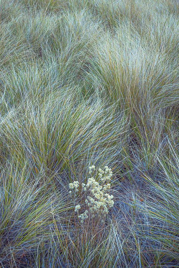 Grass Photograph - Bunchgrass and Dry Wildflowers by Alexander Kunz