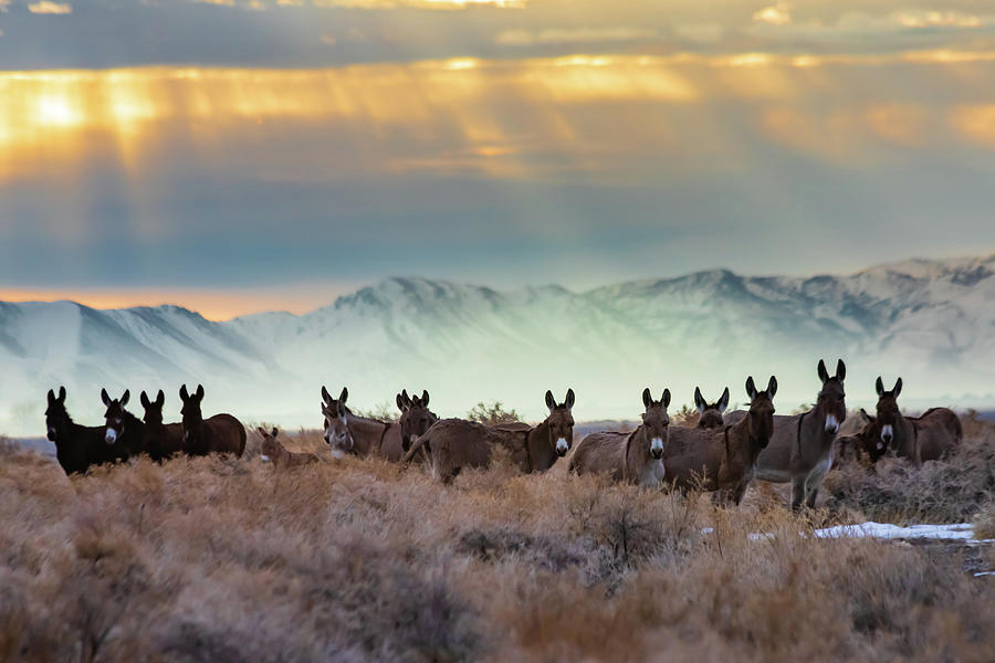 Burros And Rays Photograph