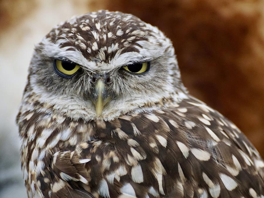 Burrowing Owl by Joy of Life Arts