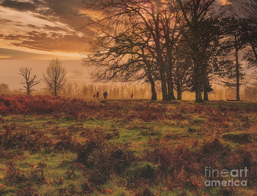 Bushy Park Landscape by Leigh Kemp