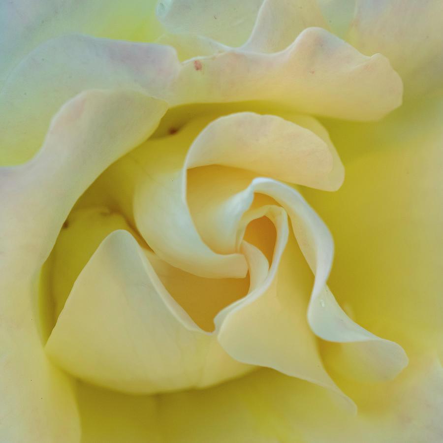 Butter Cream Photograph