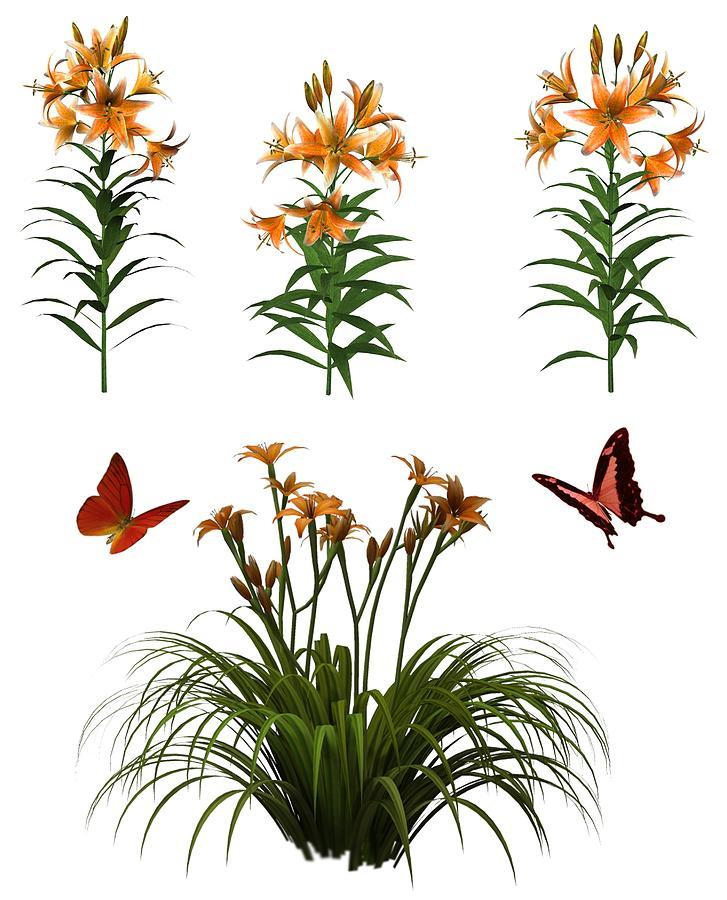 Butterflies And Tiger Lilies Painting