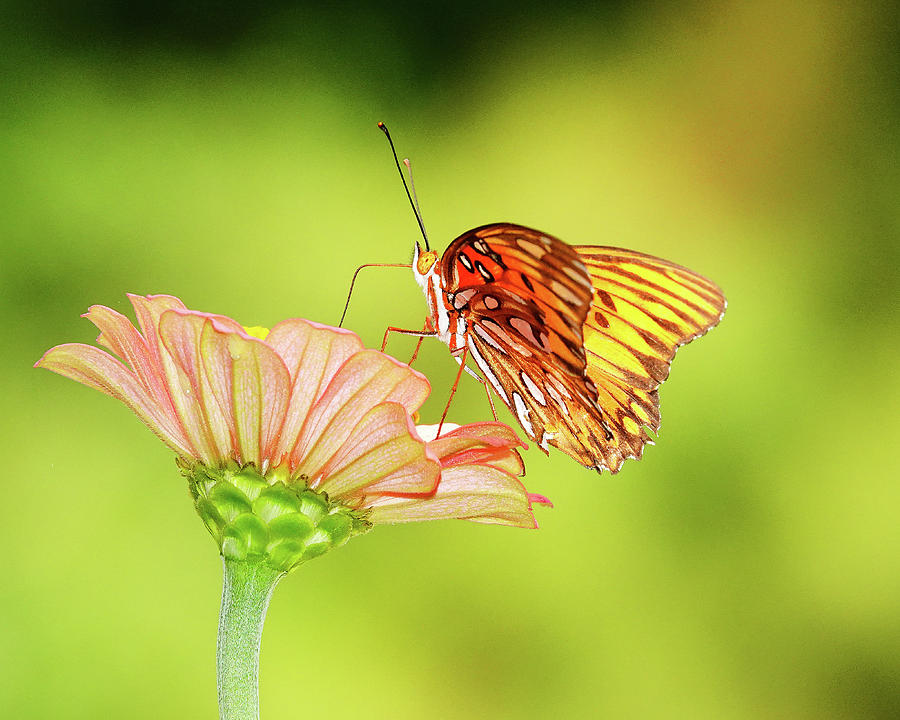 Butterfly 200 Photograph