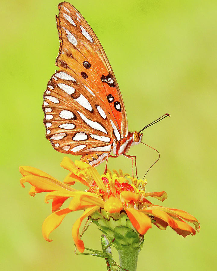 Butterfly 61 Photograph