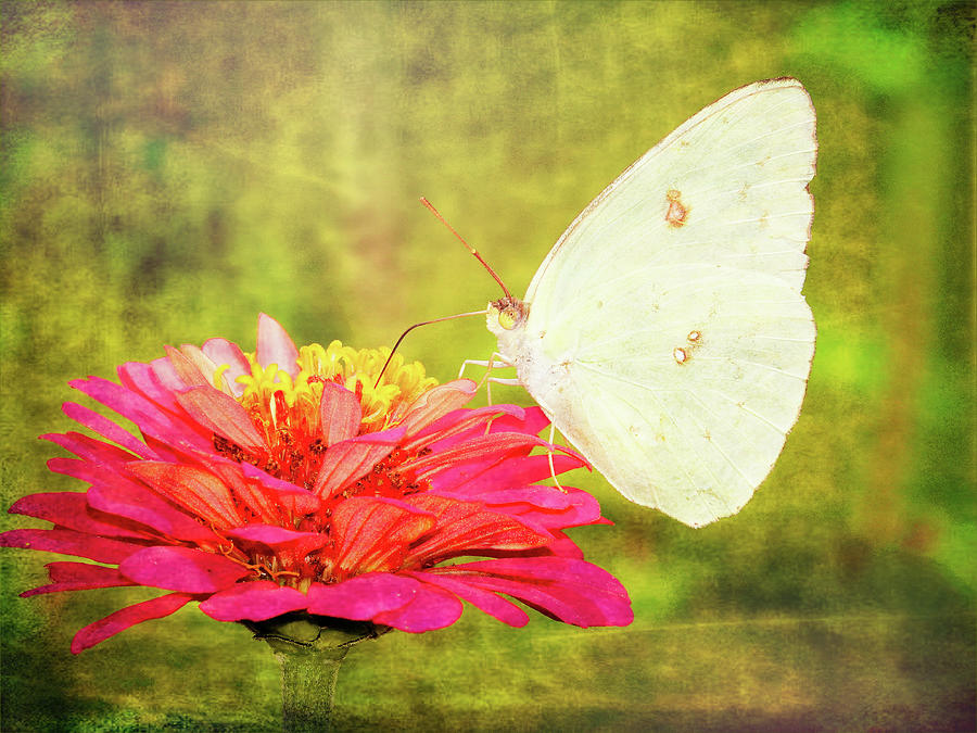 Butterfly 9996 Photograph