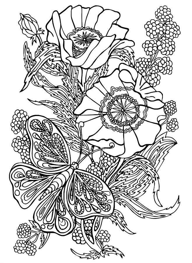 Butterfly And Raspberries Drawing