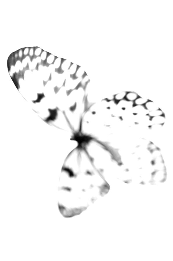 Butterfly Blanc - Minimal Abstract Black And White by Marianna Mills