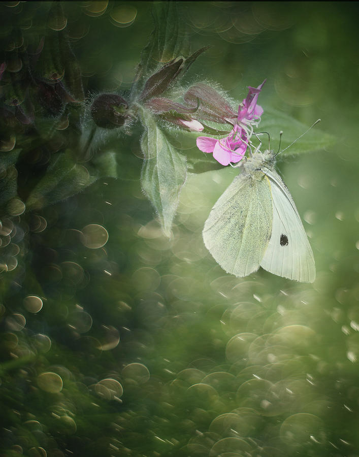 Nature Photograph - Butterfly Bokeh by Suesy Fulton