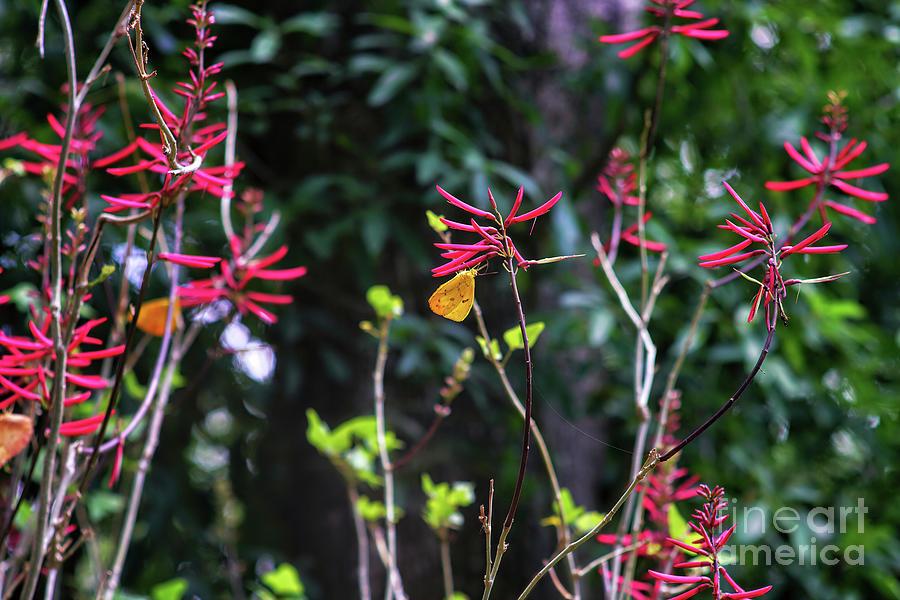 Butterfly Garden Photograph - Butterfly Garden by Felix Lai