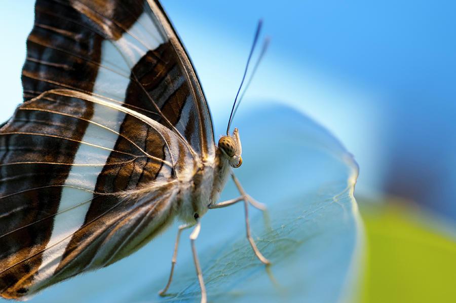 Butterfly Photograph - Butterfly In A Blue World by Lieve Snellings
