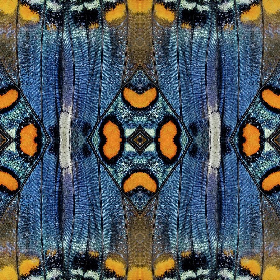 Butterfly Wings Two by Glenn DiPaola