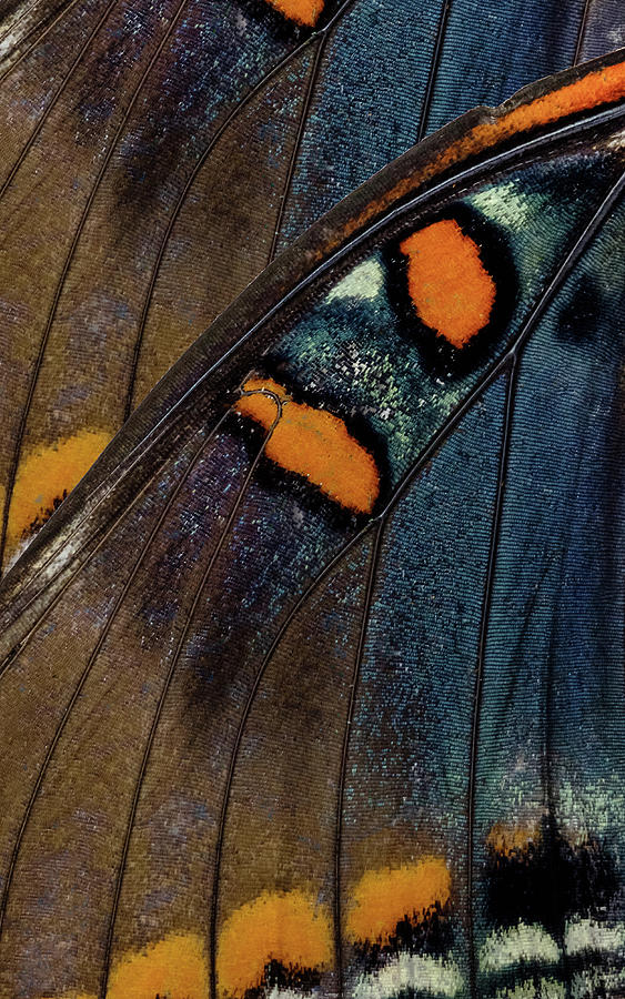 Butterfly Wings One Left Panel by Glenn DiPaola