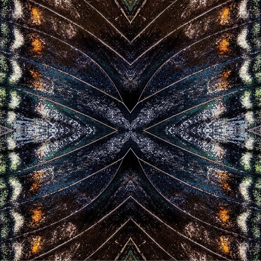 Butterfly Wings Four by Glenn DiPaola
