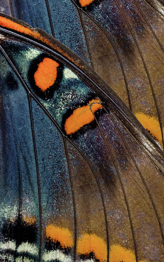 Butterfly Wings One Right Panel by Glenn DiPaola