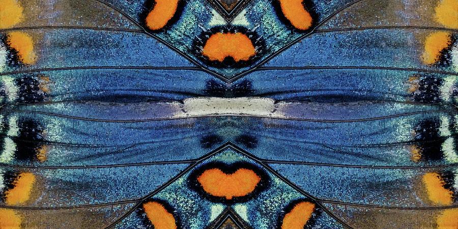 Butterfly Wings Single Flip Panel by Glenn DiPaola
