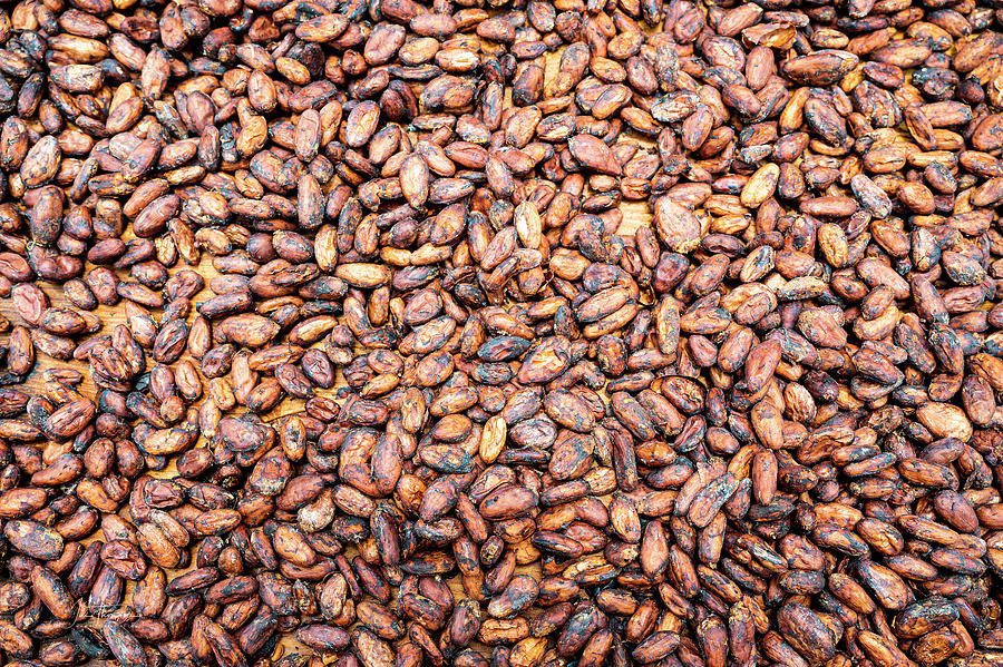 Cacao Photograph - Cacao Beans by Jim Thompson