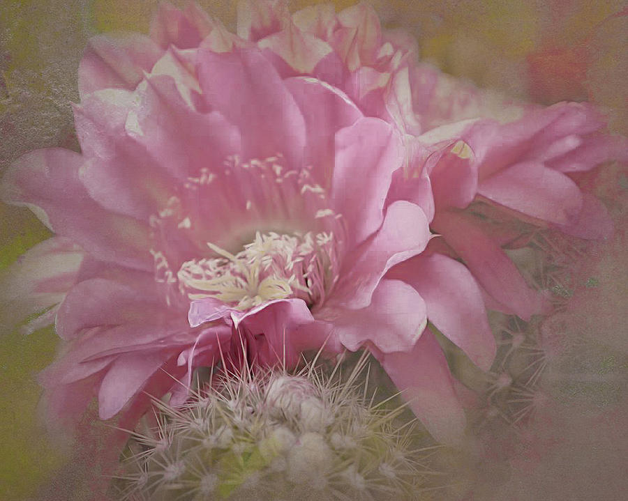 Cactus Bloom of Tucson by Steve Kelley