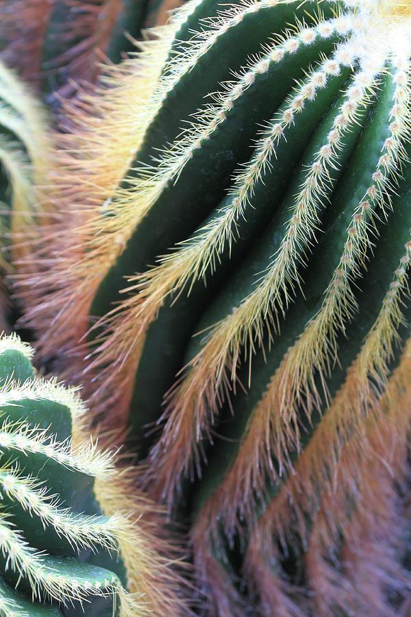 Cactus Photograph - Cactus by David Beard
