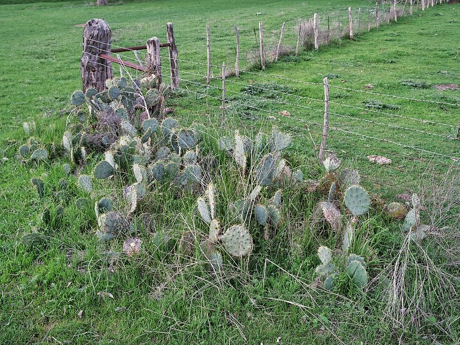 Cactus Patch Photograph